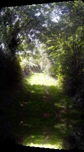 Vign_chemin_creux